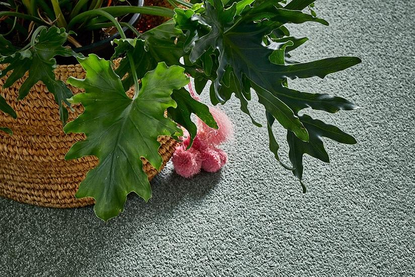 Planter sitting on sea foam green carpet